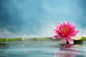 © lily - Fotolia.com