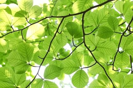 Nature Speaks: A Tiny Leaf Turned into a Nursery